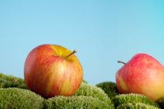 Fallen apples Stock Photo