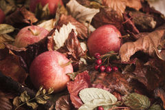Fallen apples on leaves Stock Images