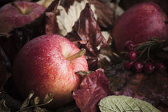 Fallen apples on leaves Royalty Free Stock Photo