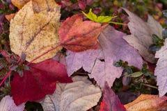 Fallen Autmn Leaves Stock Images