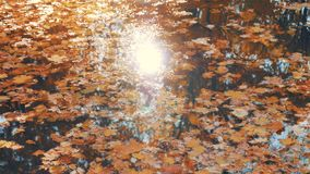 Fallen Autumn Colorful Leaves Float On Surface Of Water Which Sun Is Reflected. Fallen colorful bright fallen from trees autumn leaves of yellow and orange float stock video