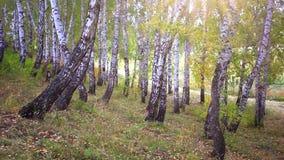 Fallen autumn forest stock video