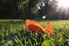 Fallen Autumn leaf in backlit Stock Images