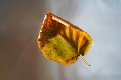 Fallen Autumn Leaf On Blurred Background