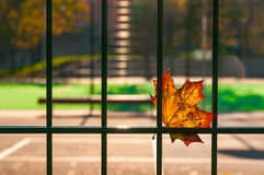 A fallen autumn leaf caught on a wire fence.  Stock Photo