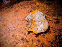 Fallen Autumn Leaf Stock Photo