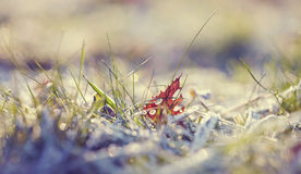 The fallen autumn leaf and grass in hoarfrost Royalty Free Stock Photography