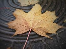 Fallen autumn leaf stock photo