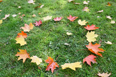 Fallen autumn leafs. Royalty Free Stock Image