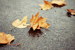 Fallen autumn leaves Royalty Free Stock Image
