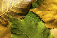 Fallen autumn leaves. Fallen autumn colored leaves closeup as background stock image