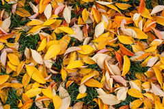 Fallen autumn leaves Stock Photography