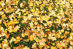 Fallen autumn leaves Royalty Free Stock Photo