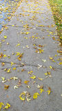 Fallen autumn leaves Royalty Free Stock Photo