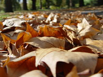 Fallen autumn leaves. Autumn leaves on the ground at a park Stock Photo