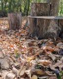Fallen autumn leaves alongside a logs Stock Photos