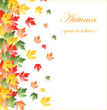 Fallen autumn leaves background Royalty Free Stock Photography