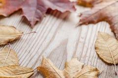 Fallen autumn leaves Stock Photo