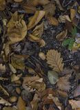 Fallen Autumn Leaves stock image
