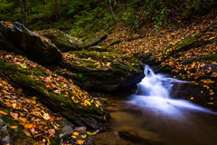 Fallen autumn leaves and cascades on Oakland Run in Holtwood, Pe Stock Photography