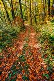 Fallen autumn leaves Stock Photography