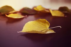 Fallen autumn leaves on a dark wooden table. Image tinted. Stock Photos
