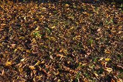 Fallen autumn leaves Royalty Free Stock Photos