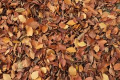 Fallen autumn leaves. In forest royalty free stock photos