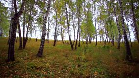 Fallen autumn leaves in the forest stock footage