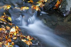 Fallen autumn leaves beside forest stream. Water showing motion blur Stock Photography