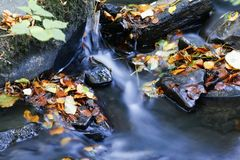Fallen autumn leaves beside forest stream. Water showing motion blur Royalty Free Stock Images