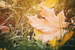 Fallen autumn leaves on grass in sunny morning Royalty Free Stock Photos