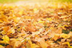 Fallen autumn leaves on grass in sunny morning Stock Photo