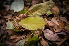 Fallen autumn leaves on grass in sunny morning light,. Toned photo royalty free stock photography