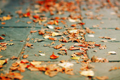 Fallen autumn leaves on the ground. On the street stock image