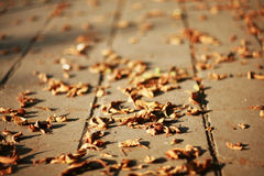 Fallen autumn leaves on the ground. On the street stock photos