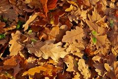 Fallen autumn leaves Stock Photos