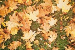 Fallen autumn leaves on the ground, fall season Stock Image