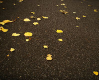 Fallen autumn leaves. Autumn leaves on the ground at a park royalty free stock photography