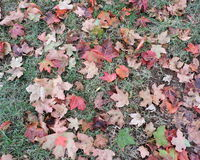 Fallen Autumn Leaves on Ground Royalty Free Stock Images