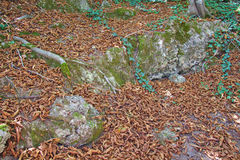 Fallen autumn leaves on the ground Royalty Free Stock Photography