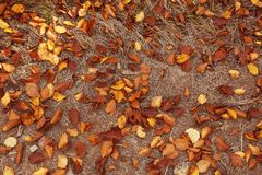 Fallen autumn leaves on ground. Top view royalty free stock image
