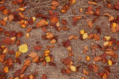 Fallen autumn leaves on ground. Top view stock image
