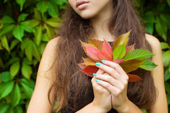 Fallen autumn leaves in the hands of a beautiful girl with full lips Stock Photos