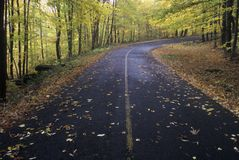 Fallen autumn leaves lay on a forest road in the Greylock State Reservation, Massachusetts Stock Photography
