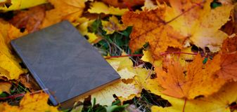 Fallen autumn leaves lie on the ground stock photography