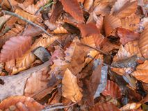 Fallen autumn leaves background. Fallen autumn leaves nature background royalty free stock photography