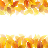 Fallen autumn leaves. Nature pattern with fallen autumn leaves, vector illustration stock illustration