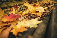 Fallen autumn leaves on old wood bench. Closeup photo stock photography