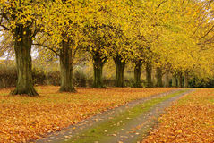 Fallen Autumn Leaves On An English Rural Track Royalty Free Stock Photo